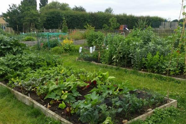 community-garden2005BE881-DF6A-049E-7C1E-058126F8ECE5.jpg
