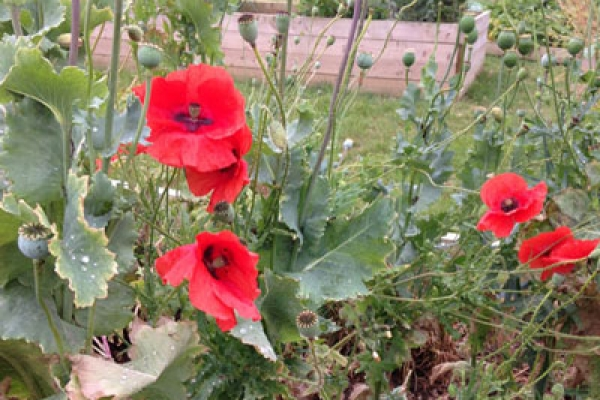 community-garden367035B9-5AD2-19A9-33AC-C3996362589D.jpg